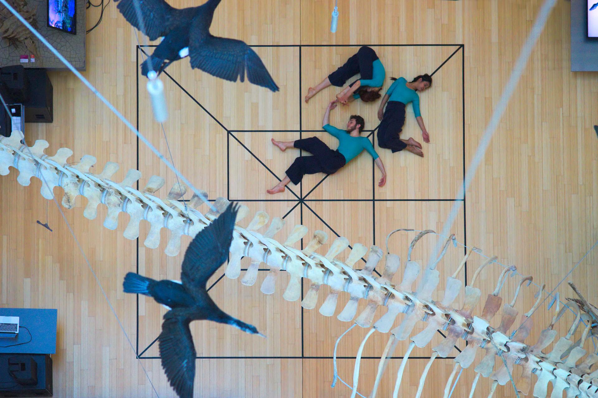 Genoma scenico / Nicola Galli / TIR Danza